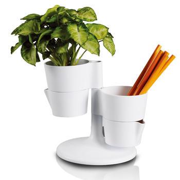 oasso笔筒植物盆栽花台-赠花种泥土